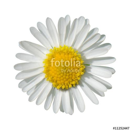 Ромашка17
